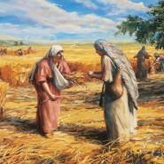 Seeking Gleaners